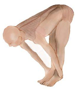 Culture physique et déséquilibre musculaire