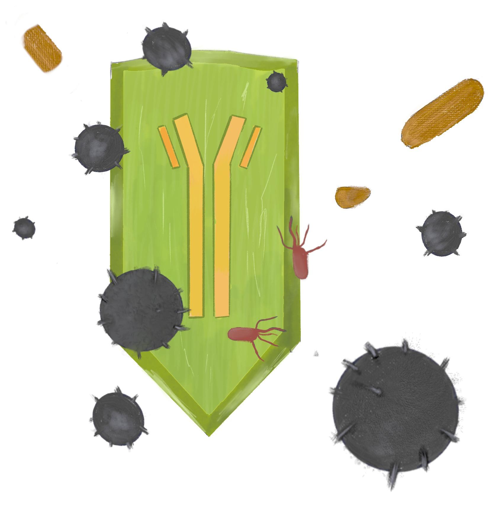 supernaturo-bouclier immunitaire